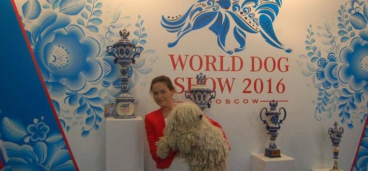 WORLD DOG SHOW 2016 , MOSCOW -результаты наших пули